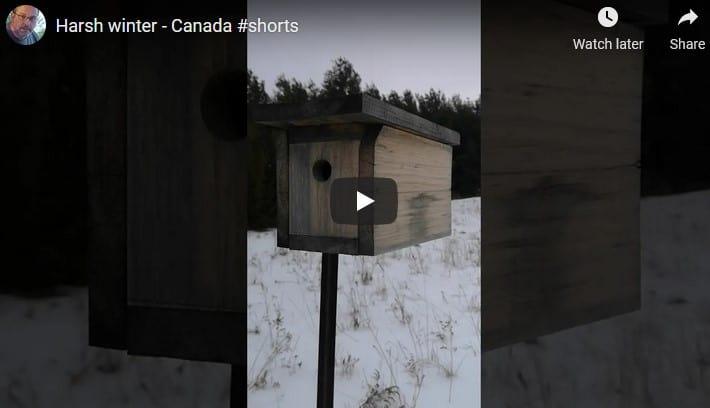 Harsh winter for birds